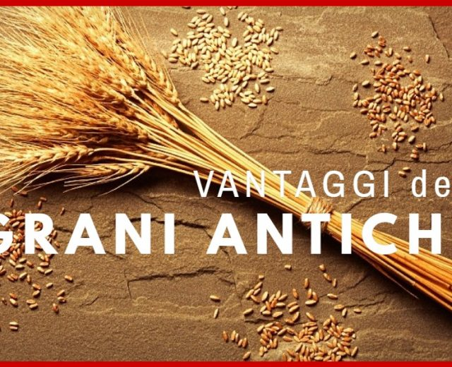 Vantaggi dei grani antichi per produrre pasta fresca